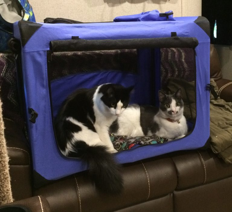 two cats hanging out in an open pet carrier.