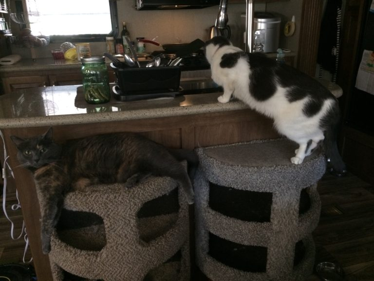Two small cat condos pushed up against a kitchen island. one has a cat sleeping on top and the other has a cat standing and looking down into the sink.