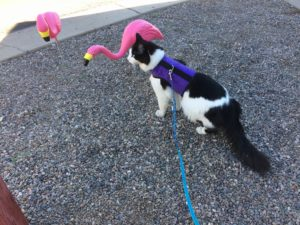 """Whatcha lookin' at, Flamingo?"" -Tycho the cat. (Goodyear, AZ. April 2019.)"