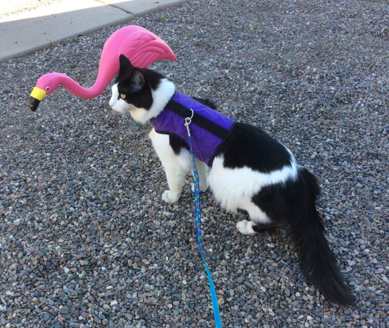 a fluffy cat in a harness and leash looking in the same direction as a plastic pink flamingo.