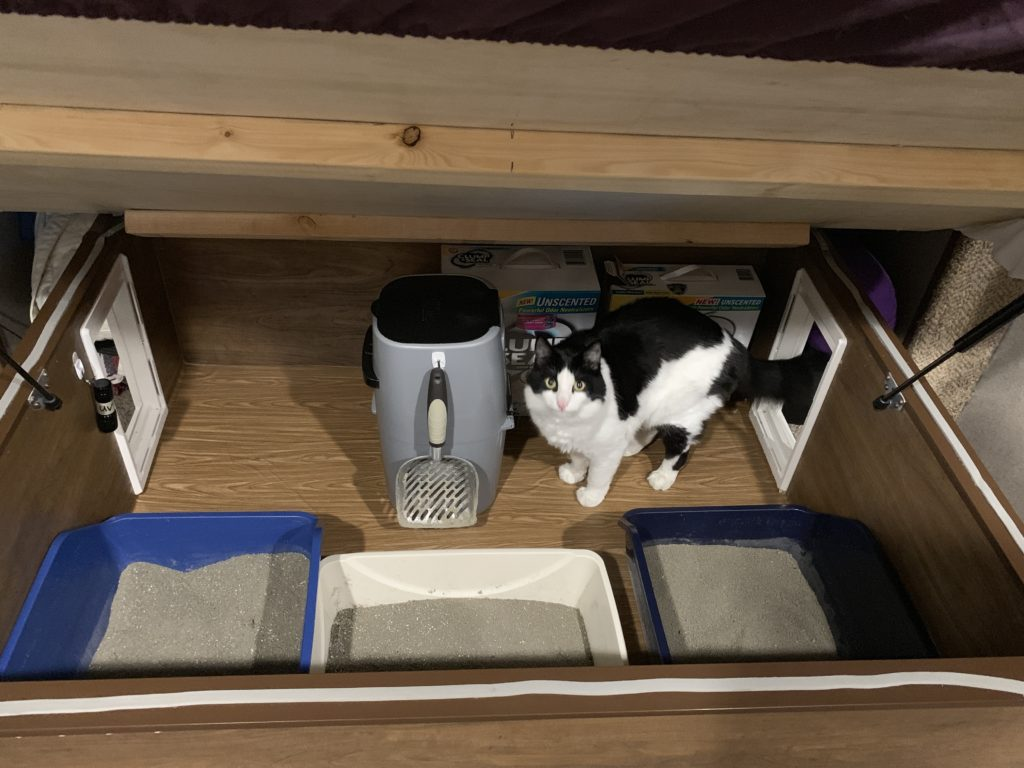 view of the finished cat box area with Tycho checking it out