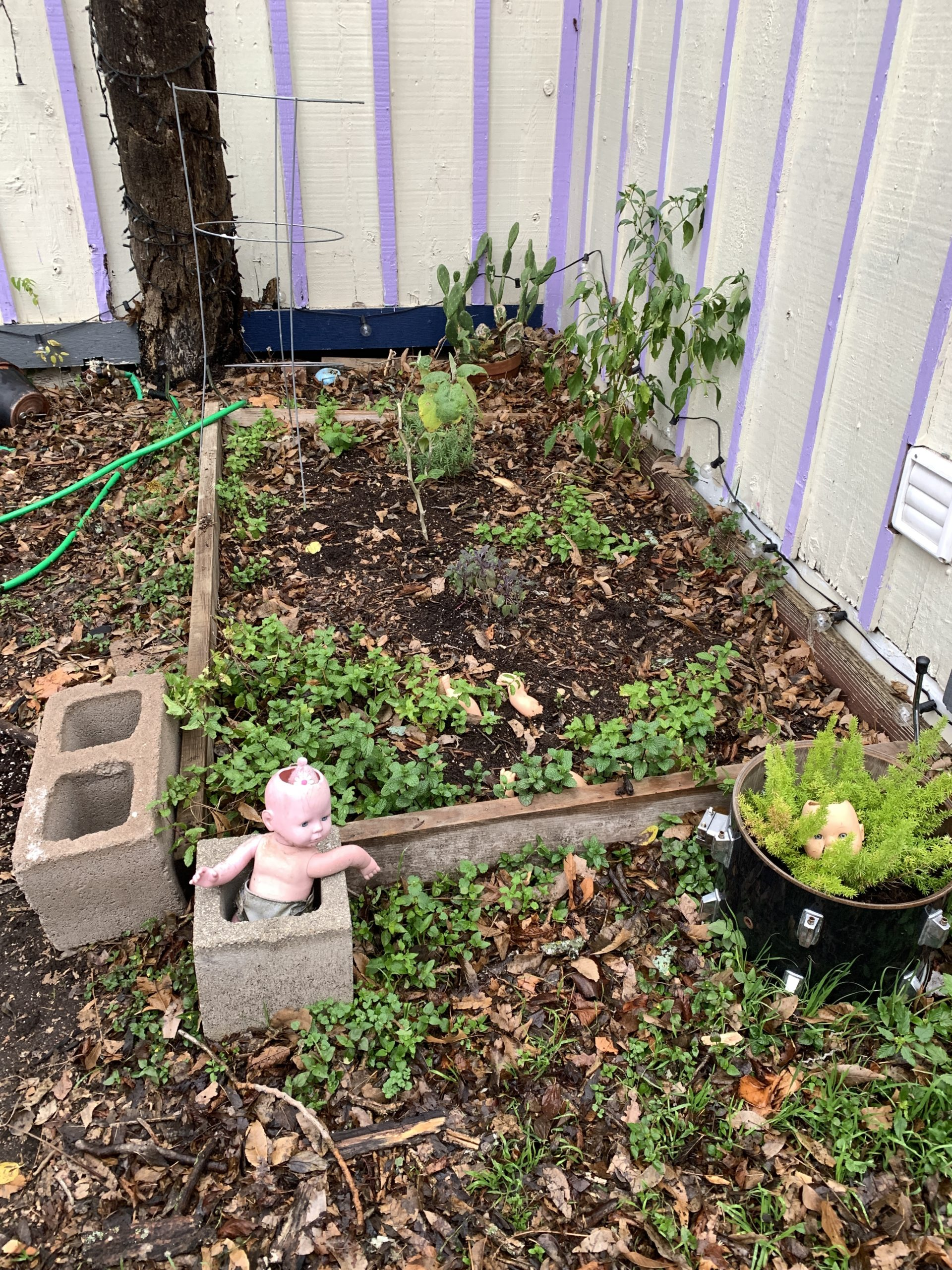 A small messy little garden with container plans, cinder blocks, and doll parts.