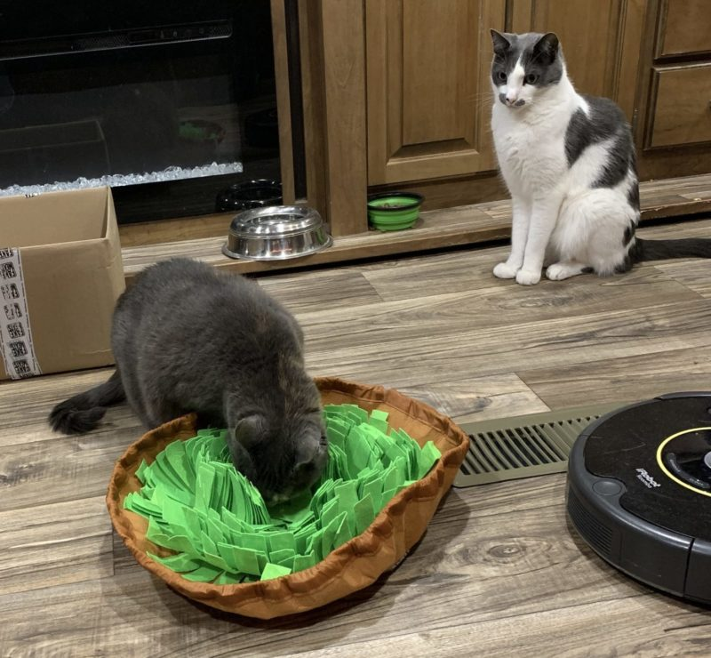 a cat sitting in the background watching another cat foraging in a cloth snuffle mat.