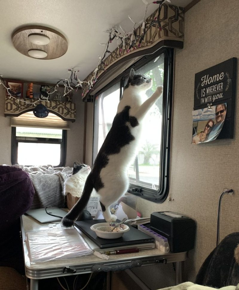 photo of a very tall cat standing on a table with his front paws on the window, looking up at something off camera.