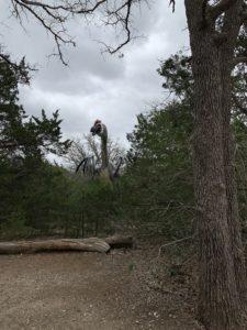 a very tall dinosaur visible behind lots of trees