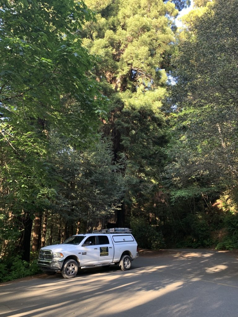 A white pickup truck with a cap and ladder rack parked in front of a whole bunch of redwoods.
